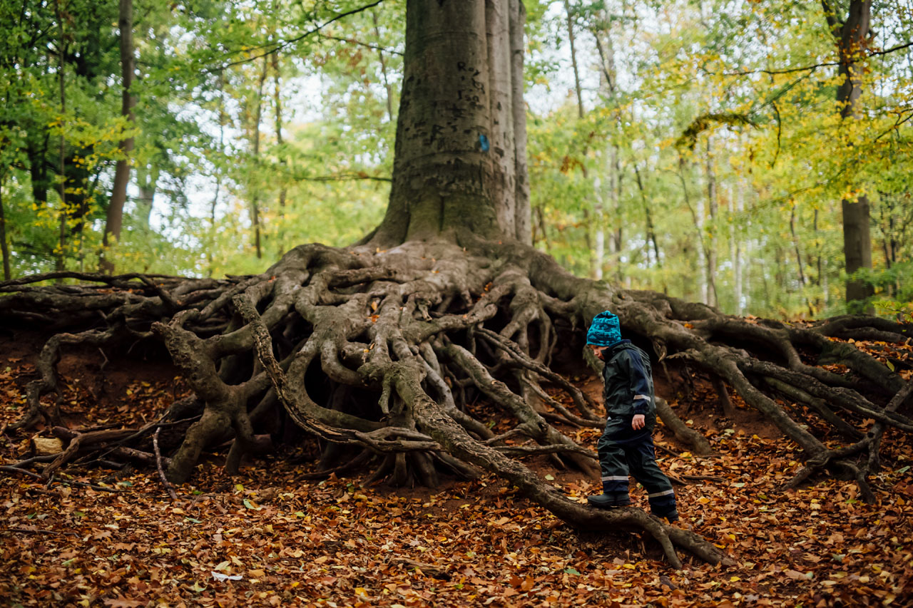 Kind läuft auf Wurzeln im Wald