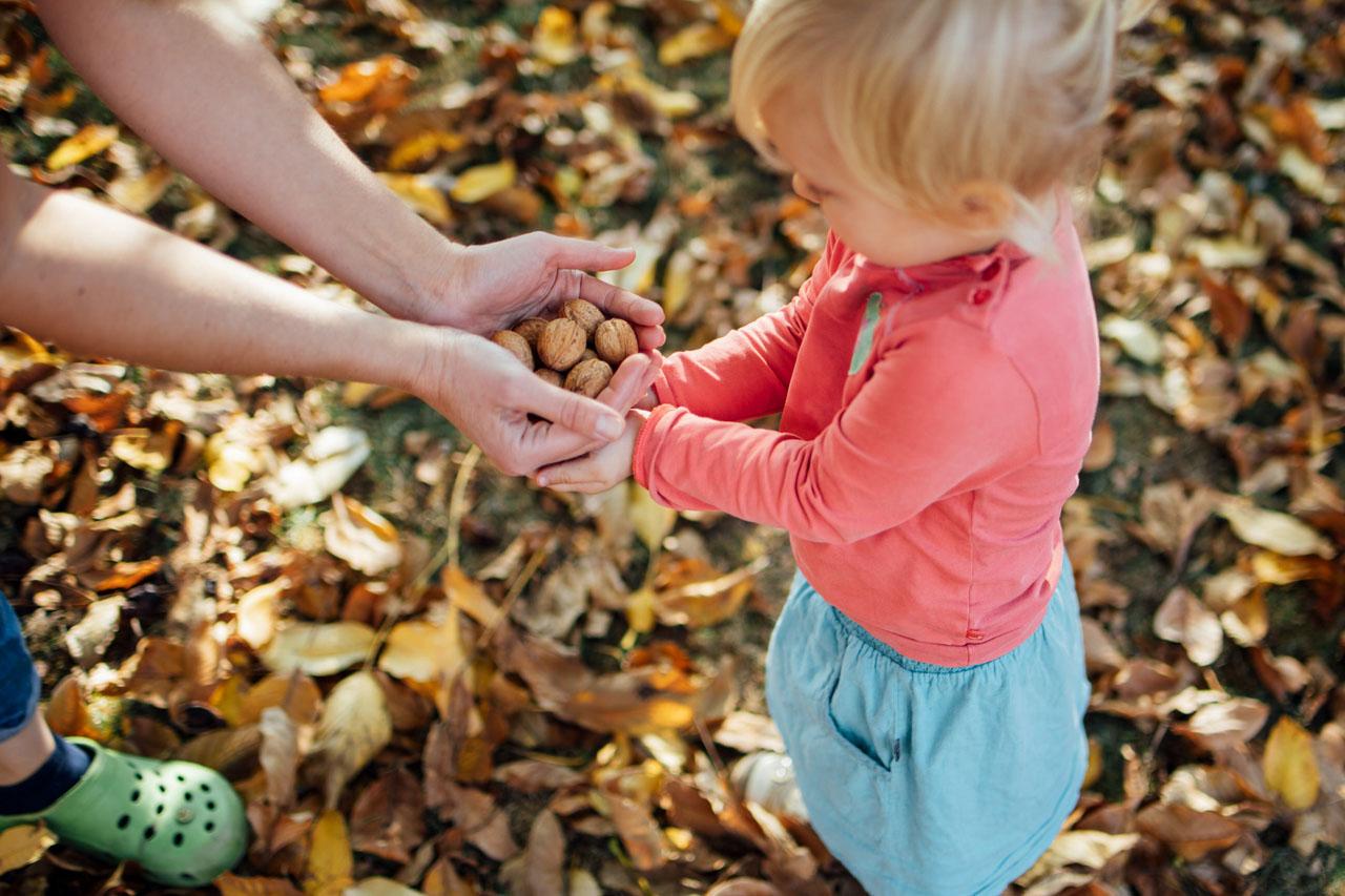 Mutter gibt der Tochter eine Handvoll Walnüsse