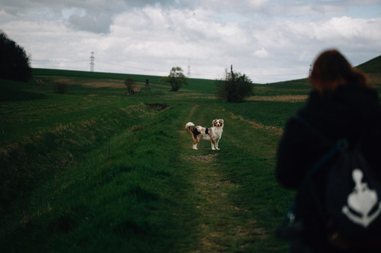 Tierfotografie (05)