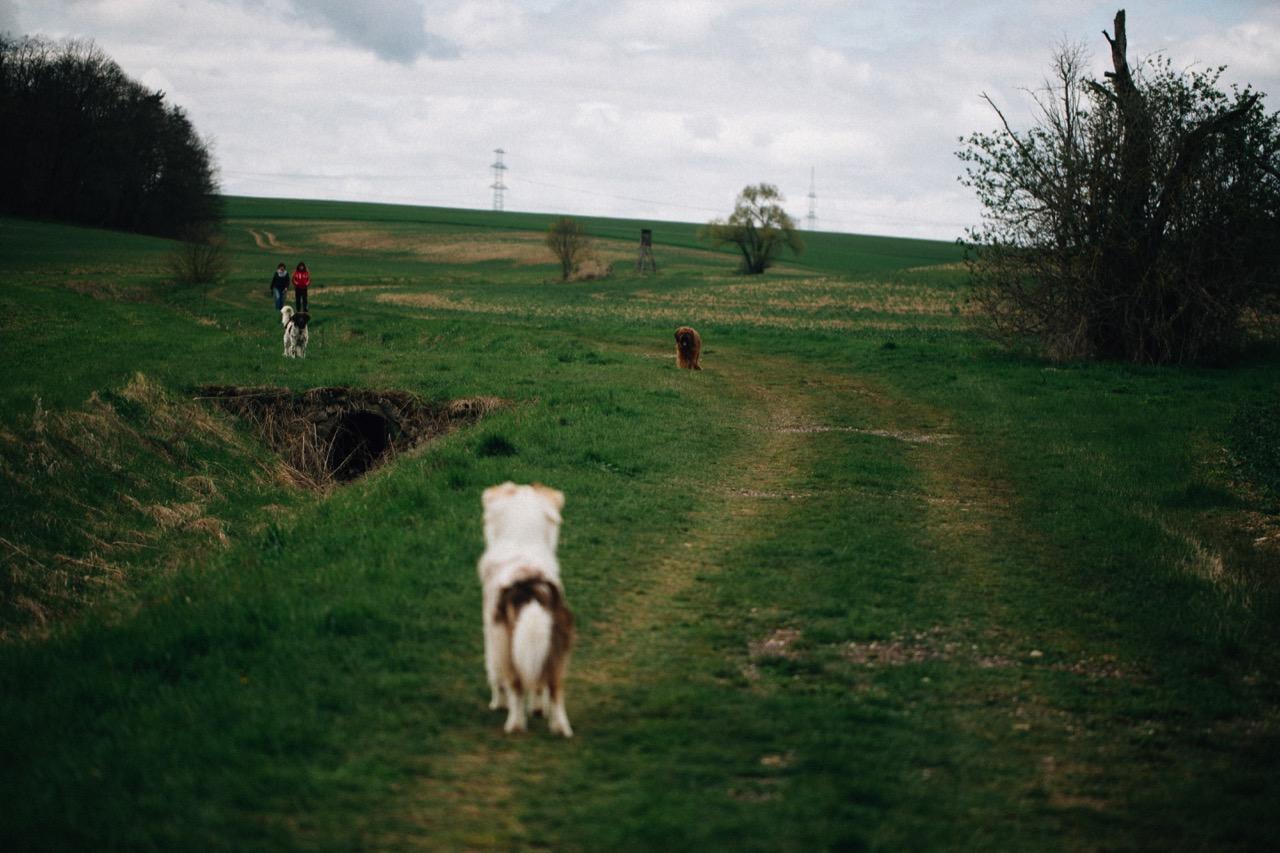 Tierfotografie (07)
