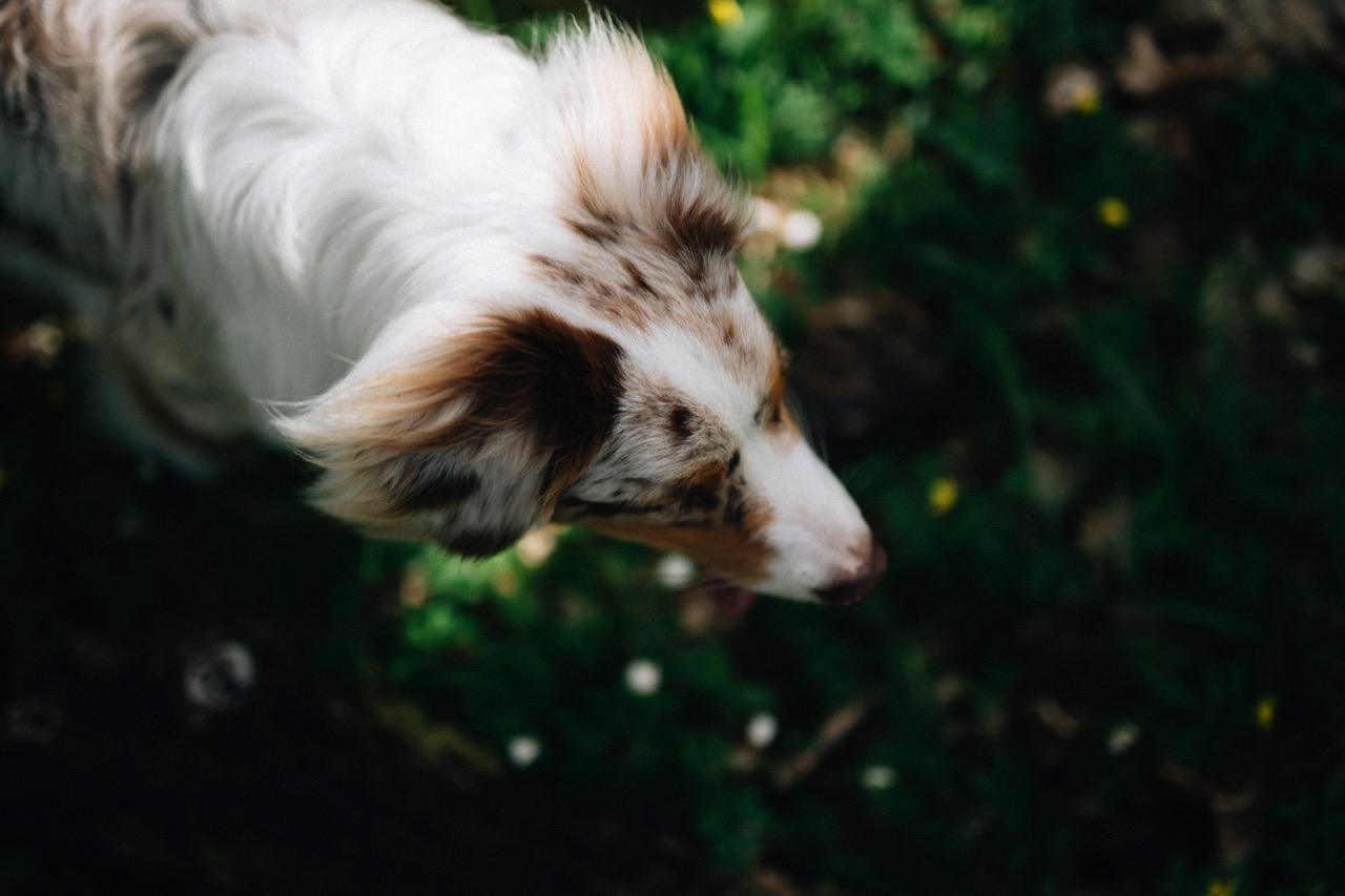 Tierfotografie (10)