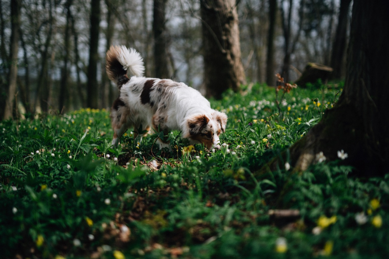 Tierfotografie (11)