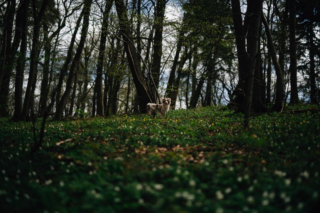 Tierfotografie (12)