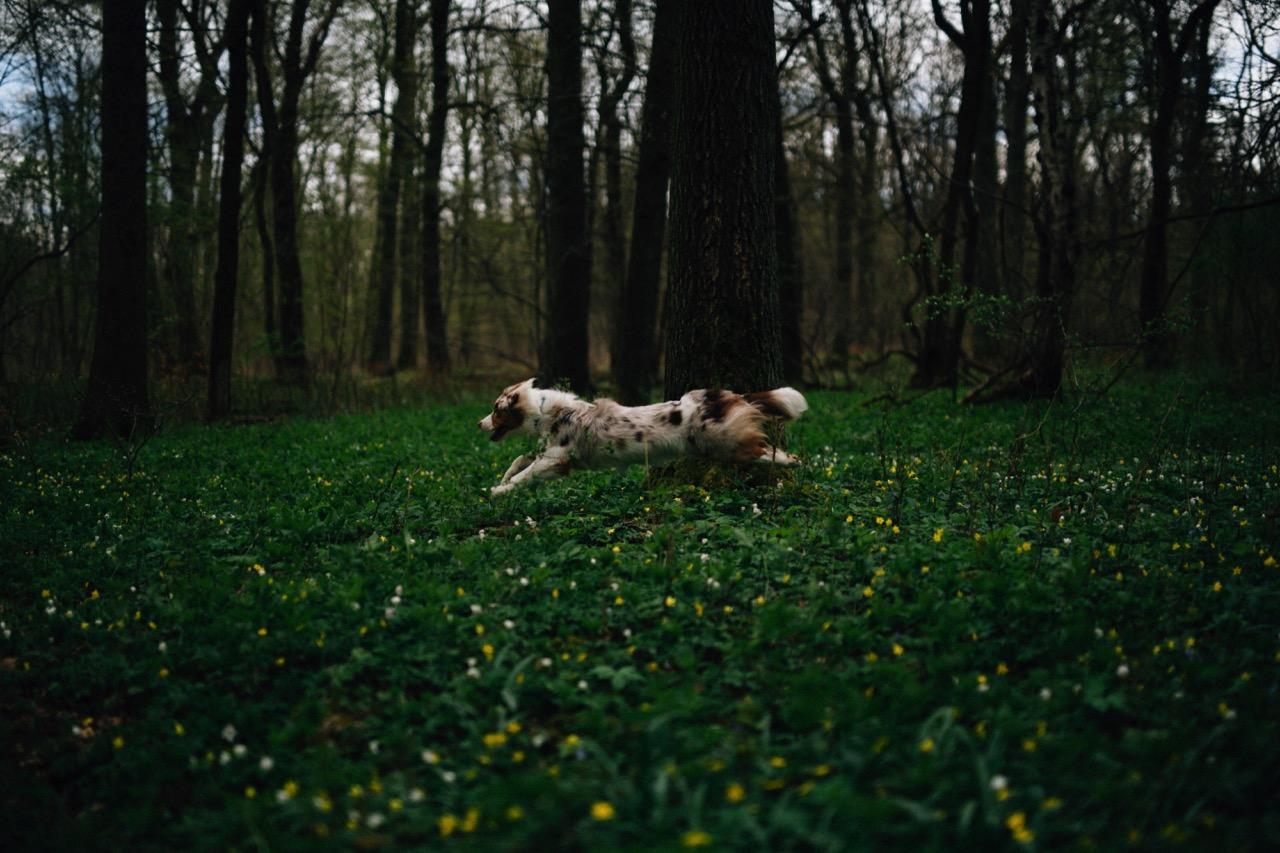 Tierfotografie (15)