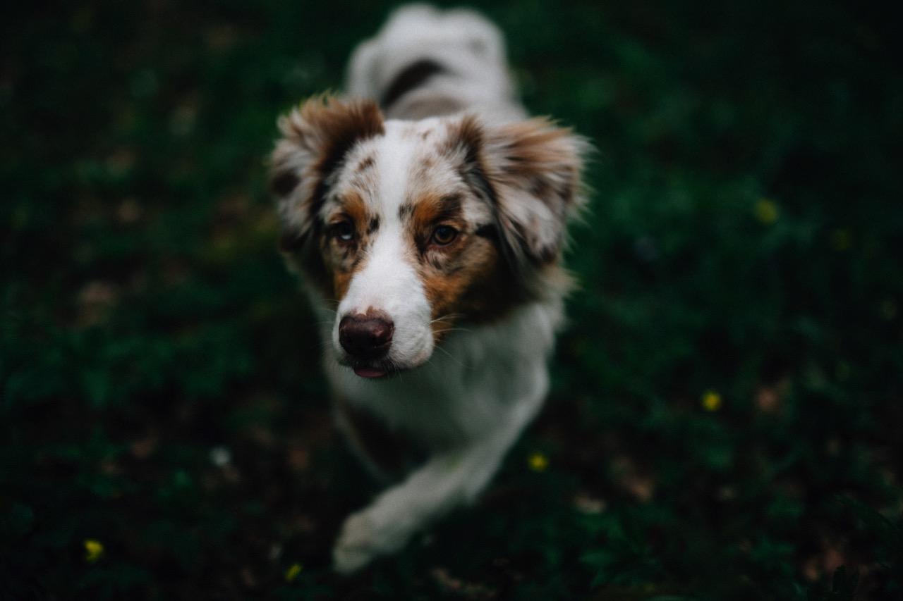 Tierfotografie (21)